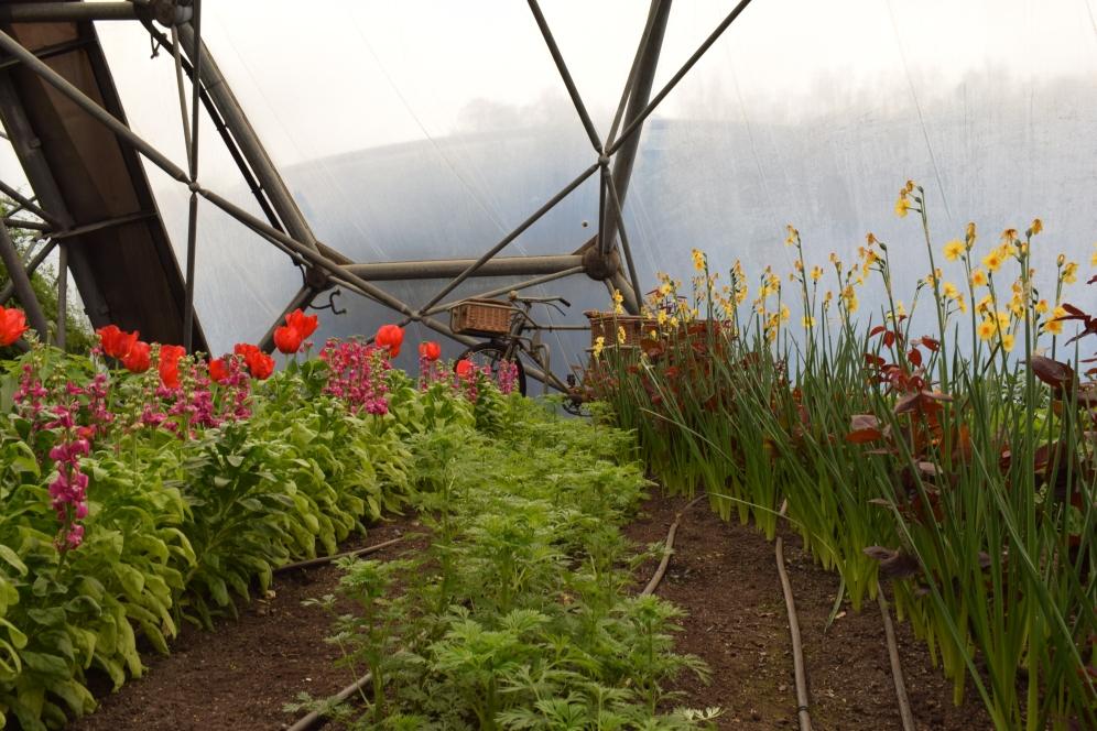 Eden Project Flowers 3