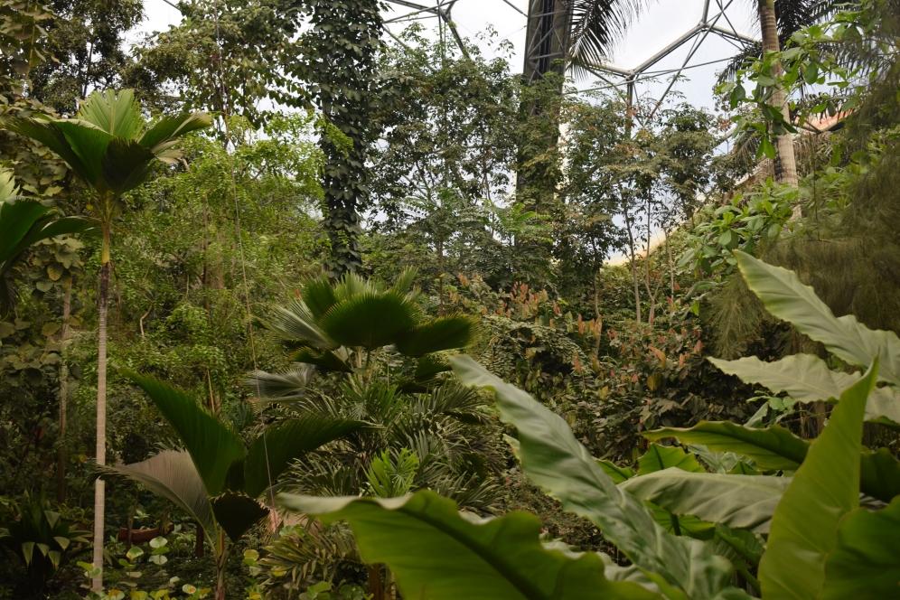 Eden Project Tropical Room 1