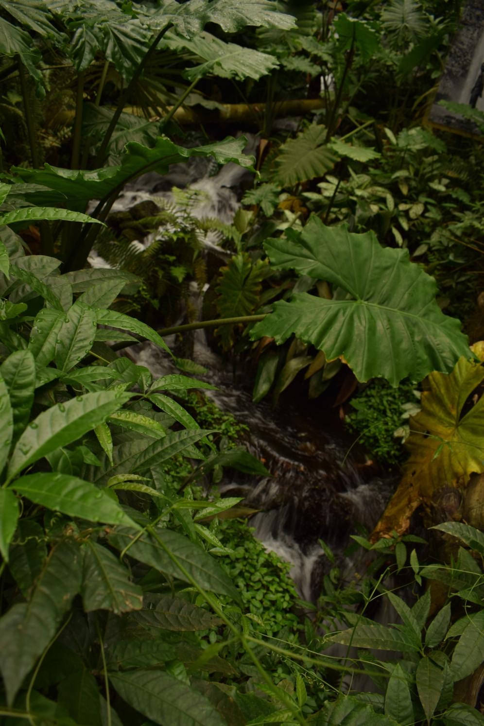Eden Project Tropical Room 5