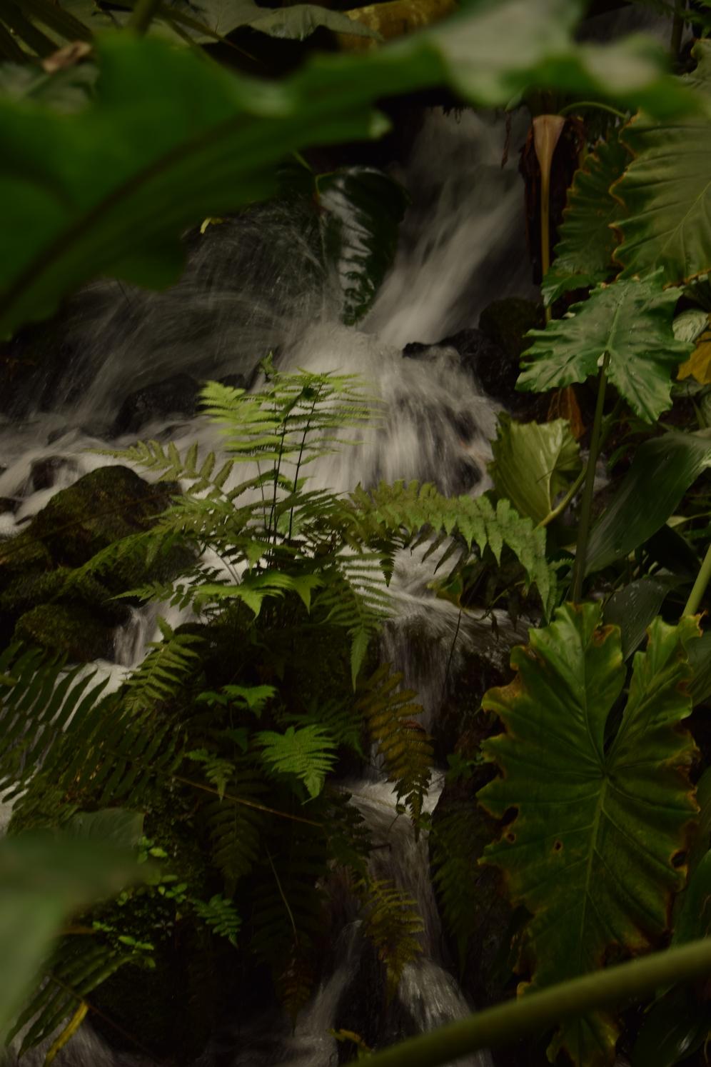 Eden Project Tropical Room 6
