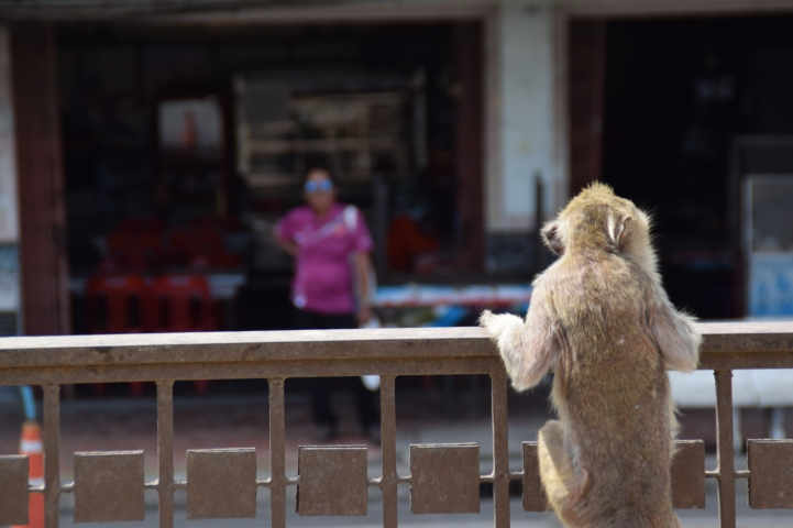 Lopburi - Monkey Temple 3